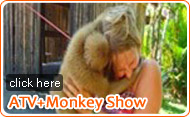 ATV and Monkey Show by JC Tour
